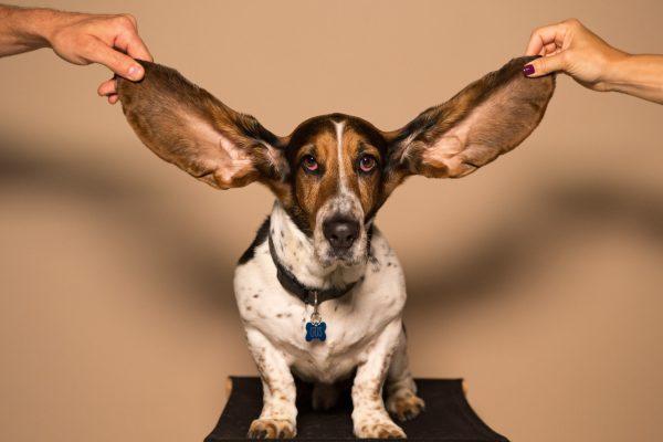 zaburzenia przetwarzania słuchowego